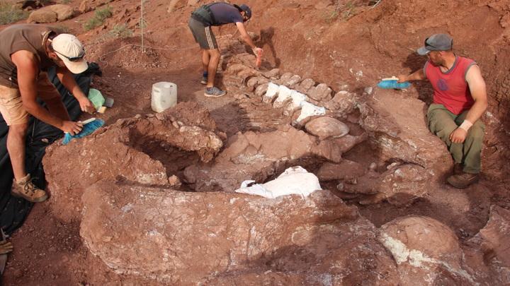 Обнаружен самый большой динозавр за всю историю Земли