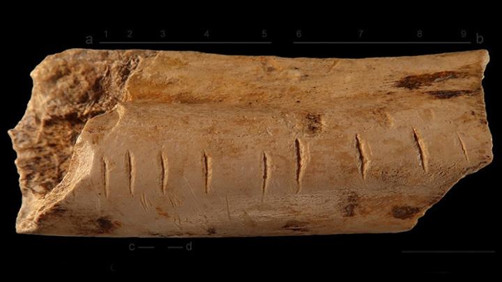 У неандертальцев обнаружили способность считать