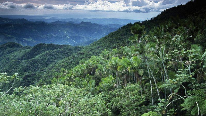Исчезающие тропические леса Африки оказались спасителями планеты