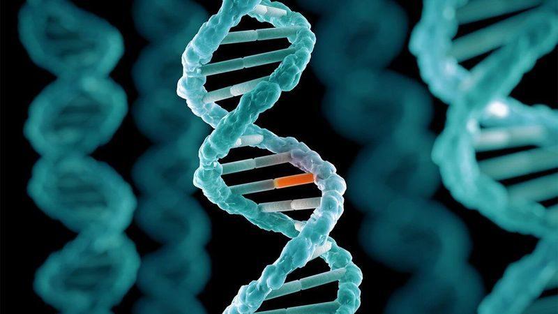 Ученые нашли генетическую мутацию, продлевающую жизнь на 23%