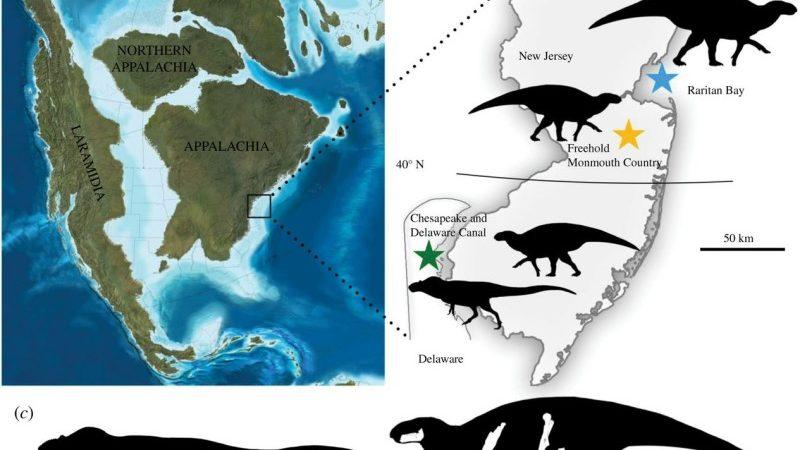 Найден новый вид тираннозавров, который жил на Восточном побережье Северной Америки